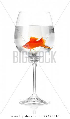 Goldfish in glass isolated on white