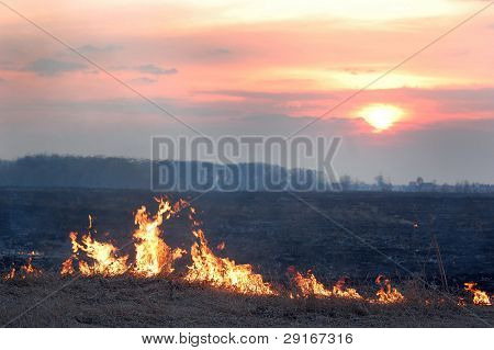 Fire of grass at sunset