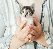 Close Up Of Cute Kitty In Woman`s Hands. Pretty Woman Holding A Cat Closely To The Camera. Adorable  poster