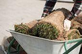 Natural Grass Turf Professional Installer. Gardener Installing Natural Grass Turfs Creating Beautifu poster