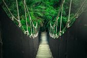 Rope Bridge In The Jungle, Wooden Planks And Dark Ropes, Bright Green Greens, A Bridge Between The T poster