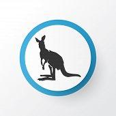 Kangaroo Icon Symbol. Premium Quality Isolated Joey Element In Trendy Style. poster