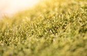 Beautiful Green Moss In The Sunlight, Moss Closeup, Macro. Moss Grows On The Tree, Beautiful Backgro poster