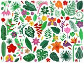 Tropical Rainforest Plants Set. Cartoon Exotic Flowers And Leaves With Floral Branches. Botanical Il poster