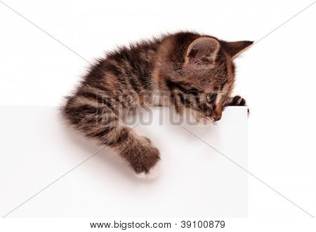 Portrait of cute little kitten with empty board on white background