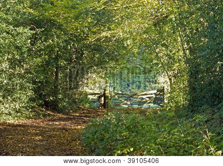 Woodland Path And Gate
