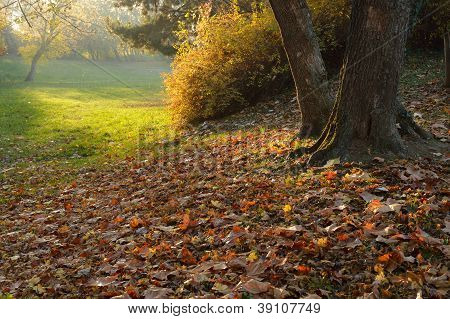 Autumnal Light In Park