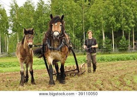 Working horse