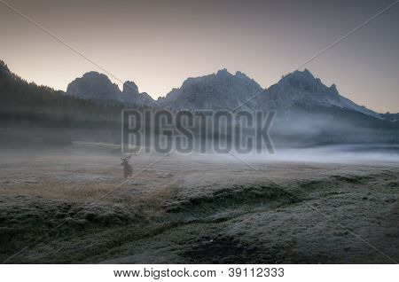Dolomites Deer