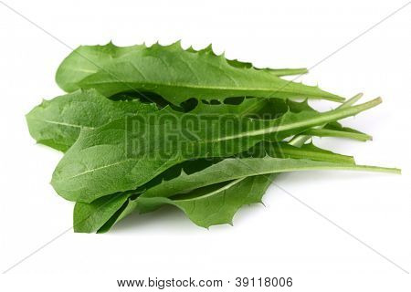 Leaves of dandelion