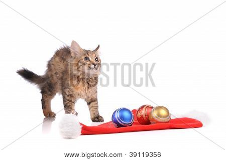 Funny Cat With New Year's Toys Isolated On White