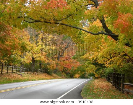 Autumn Foliage Framing The Roadway