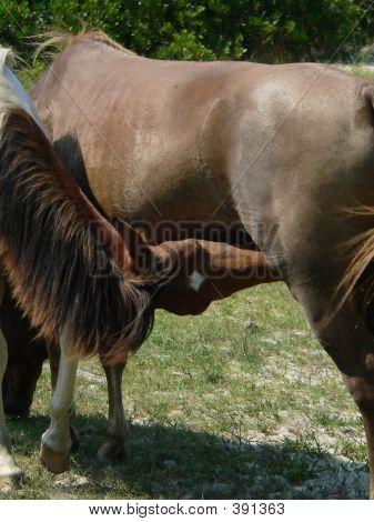 Pony de alimentación