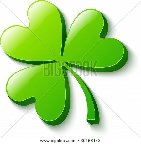 Isolated green clover on white