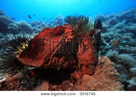 Indonesian Coral Reef