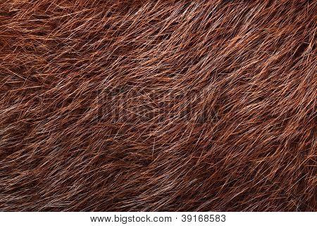 Natural Brown Nutria Fur