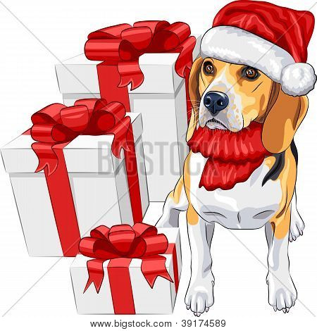 Vector Dog Beagle In The Hat Of Santa Claus With Christmas Gifts