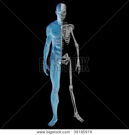 High resolution concept or conceptual 3d male or man running over a black background as a metaphor for anatomy,body,biology,medicine,muscle,bones,muscular,anatomical,science,education,sport or x-ray