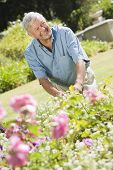 picture of grey-haired  - Senior man in a flower garden - JPG
