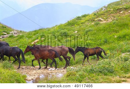 Horses Herd Running On Green Valley In Mountains With Water Stream