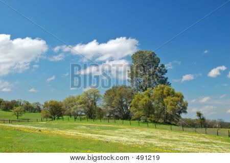 Springtime Meadow