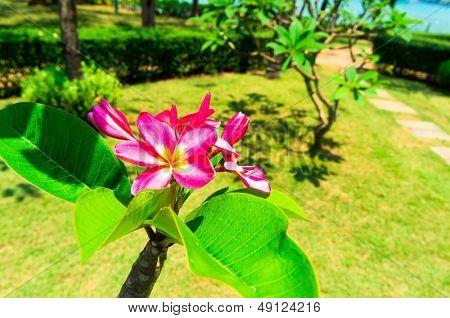 Tropical Verdure Flora and Sea