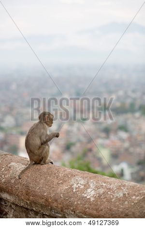 Monkey At The Swayambhunath Temple In Nepal