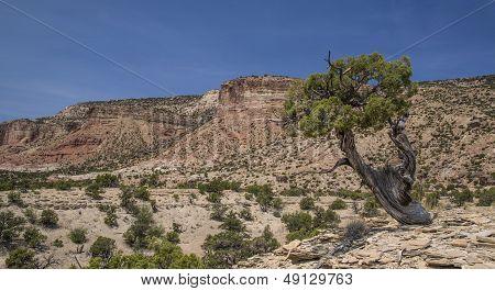 Juniper Tree and Cedar Mountain in Utah