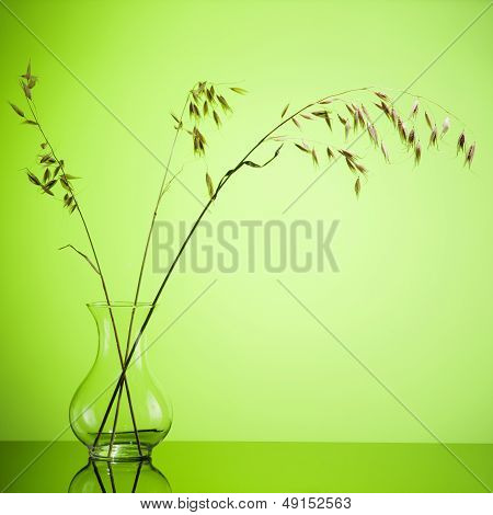 Bunch of oats ear of wheat in vase