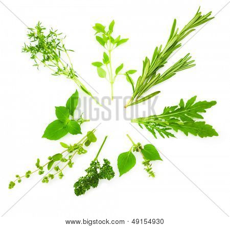 Circle Border of Different  Fresh Spice Herbs  isolated on white background / Basil, Chive, Majoram, Oregano, Parsley, Thyme, Rucola and Rosemary