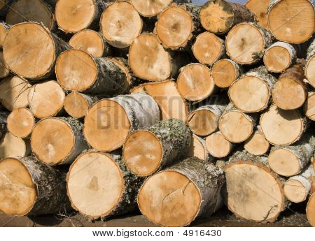 Pile Of Birch Logs