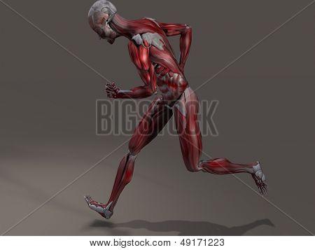 Musculatura masculina en acción