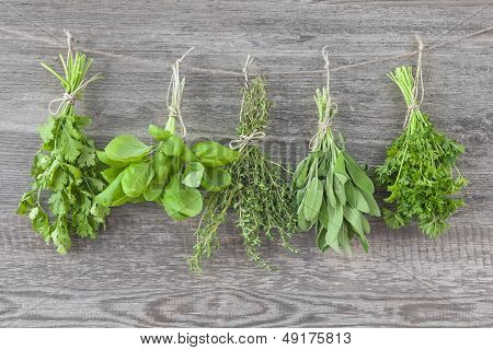 Fresh Herbs Hanging