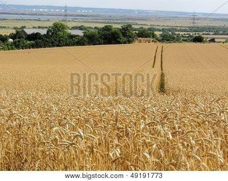 Crop In Line
