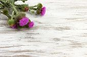 stock photo of scottish thistle  - Thistle flowers on wooden background - JPG