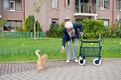 foto of street-walker  - Very old lady with blue walker with red cat by her apartment - JPG