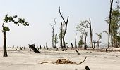 stock photo of sundarbans  - Destruction after the cyclone - JPG
