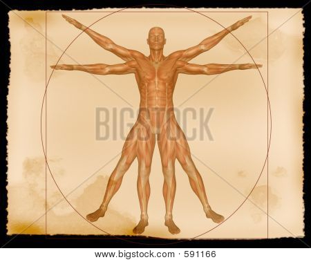 Muscle Illustration