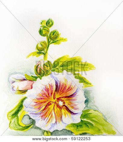 Hollyhock flowers. Watercolor