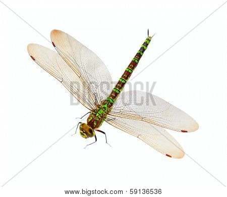 Colorful dragonfly isolated on white background