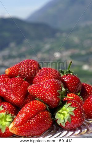 Outdoor Strawberry