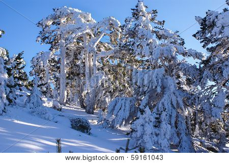 Winter in the mountain navacerrada madri dspain