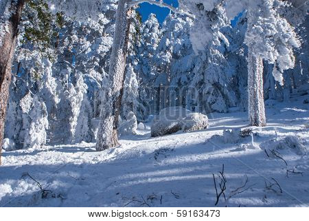 Winter in the mountain navacerrada,, madrid ,spain,