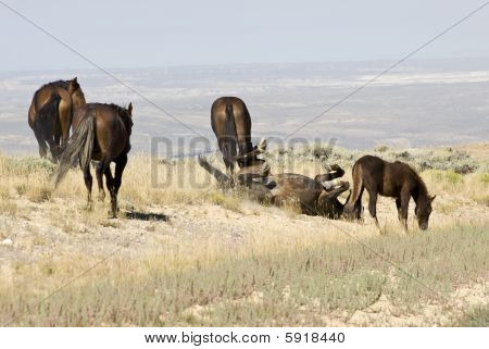 White Mountain Mustangs