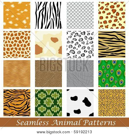Animal Skin Seamless Pattern