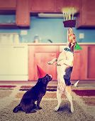 stock photo of pooch  - a pug and a beagle with birthday cake and an instagram filter done vintage style for a retro look - JPG