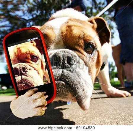 a cute bulldog taking a selfie with a cell phone
