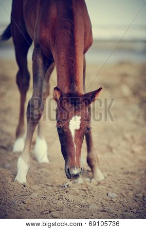 Foal With An Asterisk On A Forehead.