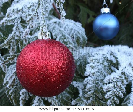 Red and blue baubles on frost tree
