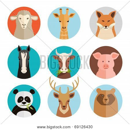 Animals avatars